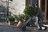 Kübelpflanzen mit Sackkarre raus - bzw. reinfahren