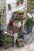 Kästen mit Gemüse - Jungpflanzen