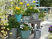 Weiß-gelbe Frühlingsterrasse
