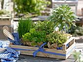 Obstkiste mit Kräutern als Geschenk : Salbei (Salvia) Stämmchen