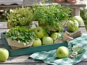 Kräuter mit grünen Äpfeln auf Holztablett