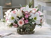 Weiß-rosa Weihnachtstrauß : Hippeastrum 'Picotee' (Amaryllis), Rosa