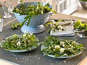 Salat mit Wildkräutern: Bellis (Gänseblümchen), Taraxacum (Löwenzahn)