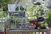 Pflanztisch mit Mini-Gewächshaus auf Balkon