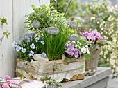 Kräuter und eßbare Blüten im Korb