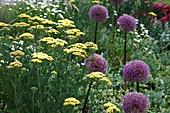 Achillea filipendulina 'Credo' (Schafgarbe), Allium 'Globemaster' (Zierlauch)