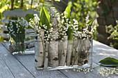 Convallaria majalis (Maiglöckchen) mit Stücken von Betula (Birke)