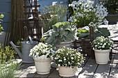 Terrasse mit grau-weißen Pflanzen