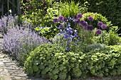 Beet mit Allium 'Purple Sensation' (Zierlauch), Alchemilla (Frauenmantel)