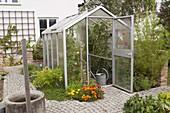 Gewächshaus mit Tomaten (Lycopersicon), Tagetes (Studentenblumen)