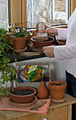 Sommerblumen und Gemüse im Zimmer anziehen
