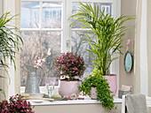 Fenster mit Chrysalidocarpus lutescens (Arecapalme), Leptospermum