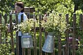 Kräutersträuße in Zink-Kannen an Zaun gehängt