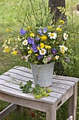 Bunter Frühsommerstrauß : Leucanthemum vulgare (Frühlings-Margerite)