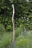 Ast von altem Holunder (Sambucus nigra) als Skulptur im Gräser-Beet