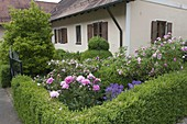 Vorgarten mit Hecke und Kugel - Formschnitt aus Buxus (Buchs), Magnolia