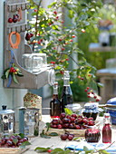 Frisch geerntete Süßkirschen (Prunus avium) einmachen