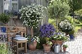 Terrasse mit Kübelpflanzen am Gartenhaus