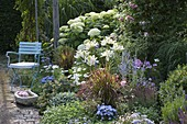 Beet mit Lilium (Lilien), Hydrangea arborescens 'Annabelle' (Hortensie)