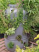 Kräutergarten in Plastiktonne mit Löchern angelegt