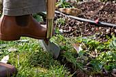 Im Frühling Rasenkanten mit dem Kantenstecher abstechen