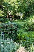 Nymphaea (Seerosen), Pontederia cordata (Hechtkraut), Polystichum (Schildfarn), Ligularia (Greiskraut), Blick auf Rasenfläche mit Liegestühlen unterm Baum, Gartenhaus