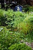 Kleiner Teich mit Nymphaea (Seerosen), Stauden am Ufer : Hieracium aurantiacum (Habichtskraut), Alchemilla (Frauenmantel), blaues Gartenhaus im Hintergrund