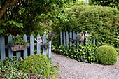 Eingang in den Garten : Buxus (Buchs - Kugeln), Hedera (Efeu), Lamium (Taubnessel), Spiraea (Spierstrauch), Holzzaun dekoriert mit Sommerblumen in Körbchen und Bechern, Schilder