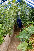 Gewächshaus mit Hochbeet : mit Stroh gemulchte Zuckermelonen, Carentais-Melonen (Cucumis melo), Tomaten (Lycopersicon) und Zucchini (Cucurbita pepo)