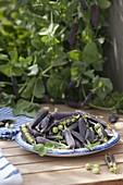 Schale mit frisch gepflückten Kapuzinererbsen 'Blauschokkers' (Pisum)