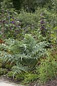 Artischocke (Cynara scolymus) mit Spilanthes (Prickelknopf) und Ratbidia