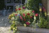 Trapezbeete mit Sommerblumen bepflanzen