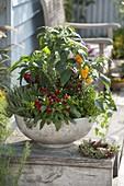Schale mit Peperoni, Zierpaprika und Gemüse-Paprika (Capsicum), Thymian