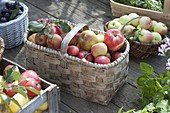 Frisch gepflückte Äpfel (Malus) in Körben
