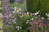 Anemone hupehensis 'Septembercharme' (Herbstanemone) in Kiesbeet
