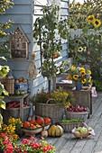 Birne 'Köstliche von Charneux' (Pyrus communis) unterpflanzt