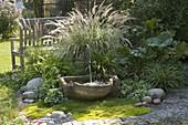 Grünes Beet mit Gräsern, Blattschmuckstauden und Brunnen