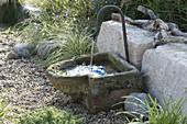 Brunnen im Kiesgarten vor Kalksteinen, Carex 'Supergold' (Buntseggen)