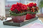 Kleine Herbstgestecke aus Rosa (Rosen und Hagebutten), Sedum