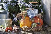 Herbstlicher Erntekorb mit Kürbissen (Cucurbita), Artischocke (Cynara)