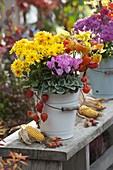 Herbstlich bepflanzter Emaille-Eimer : Chrysanthemum