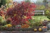 Herbstliches Terrassenbeet mit Einfasssungen aus Weidengeflecht