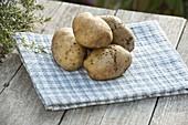 Kartoffel - Sorte 'Ackersegen' (Solanum tuberosum)