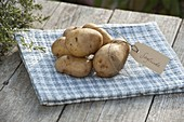 Kartoffel - Sorte 'Sieglinde' (Solanum tuberosum) mit Etikett