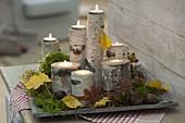 Kerzendeko mit Birkenstücken und Teelichtern auf Tablett