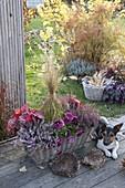 Korbkasten bepflanzt mit Calluna Garden Girls