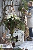 Ampel-Korb aus Salix (Weide) mit Helleborus (Christrosen)