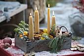 Advents-Kasten mit 4 Bienenwachs-Kerzen , Zweigen von Pinus