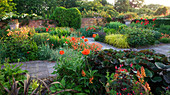 WOLLERTON Old HALL, SHROPSHIRE. VIEW ACROSS LANHYDROCK Garden SHOWING AQUILEGIA, Canna Hybrid, ERYSIMUM 'Apricot DELIGHT',PAPAVER 'BEAUTY of LIVERMERE' & ISOPLEXIS CANARIENSIS