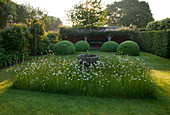 WOLLERTON Old HALL, SHROPSHIRE: THE FONT Garden with MEADOW PLANTING of DAISIES (LEUCANTHEMUM VULGARE) AND CLIPPED TOPIARY DOMES with Loggia IN BACKGROUND